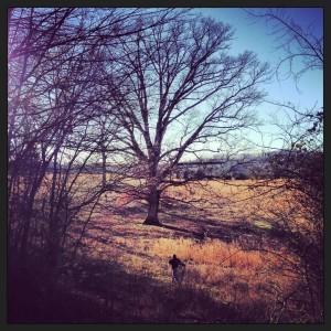 my FAVORITE tree on the farm