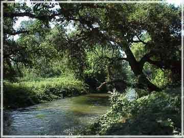 creek_and_oak
